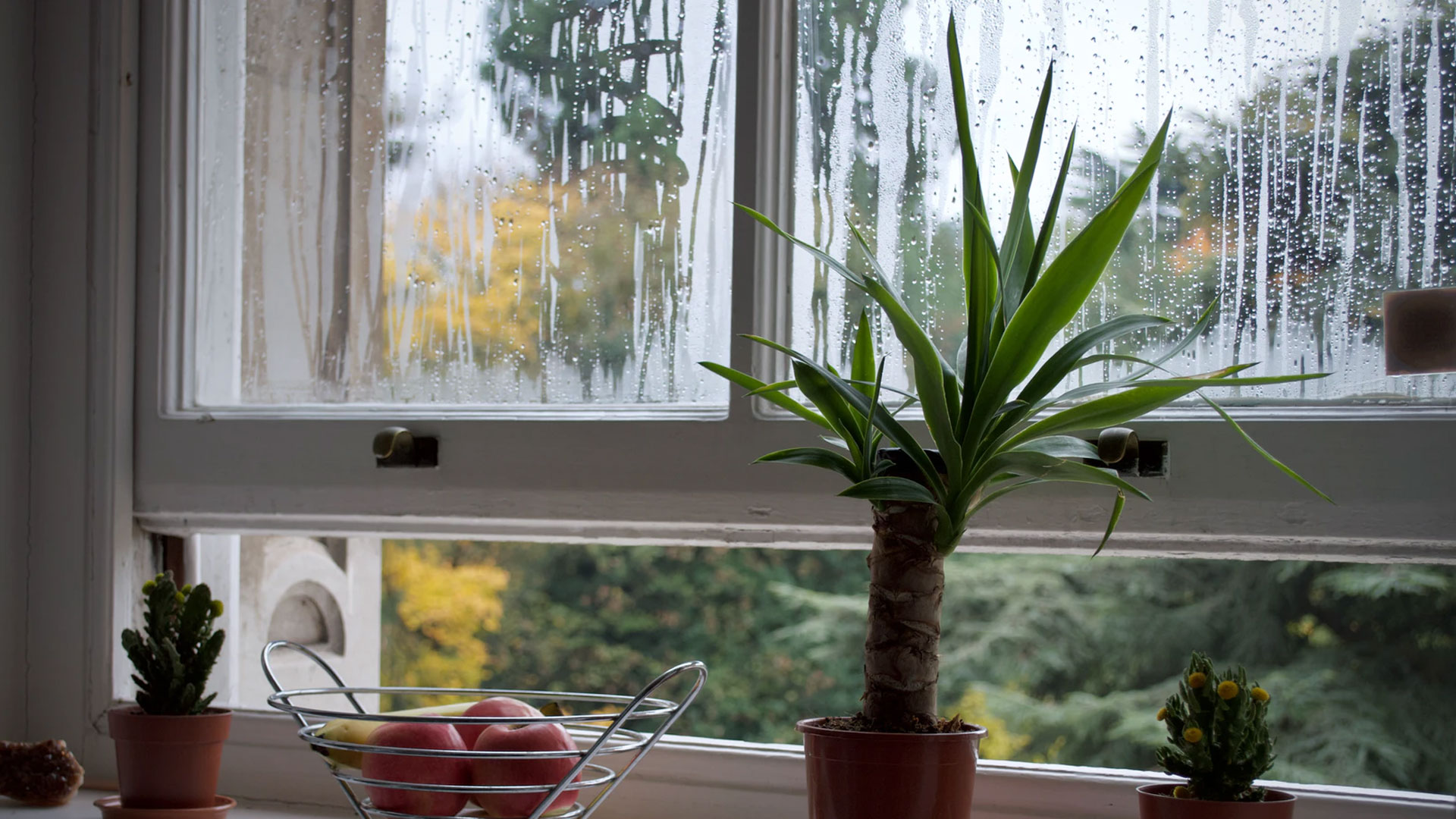 How to deal with condensation issues in the cold